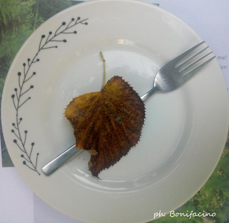otoño en el menú2